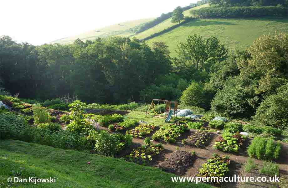 Why I love permaculture!