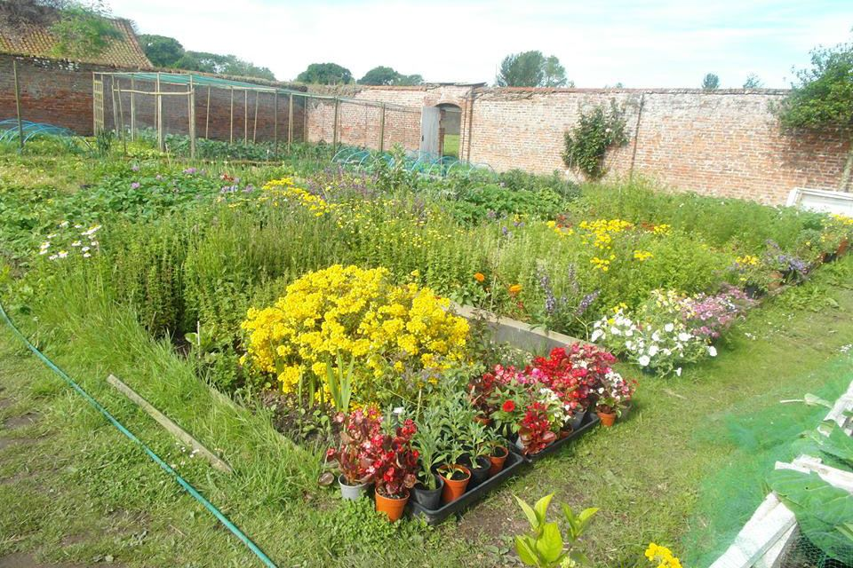 Blooming walled garden